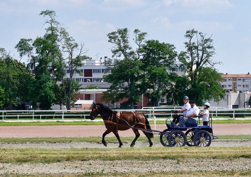 Photos de chevaux castillonnais en 2013 - Salon cheval toulouse ...